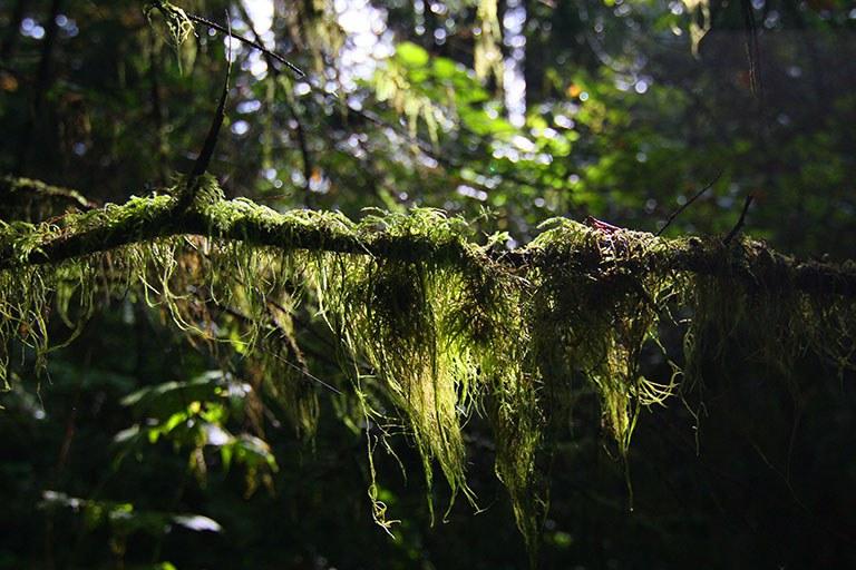 Erdsystem